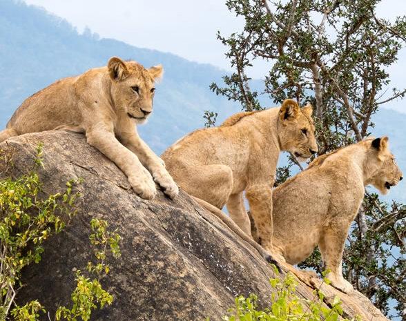 2 Days Tsavo East  West National Park