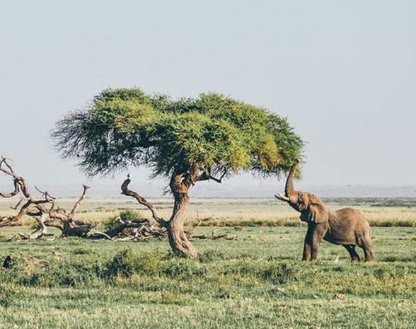 5 Days Tsavo East, West, Amboseli & Saltlick.