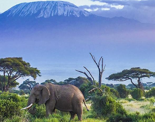 3 days Amboseli and Tsavo east