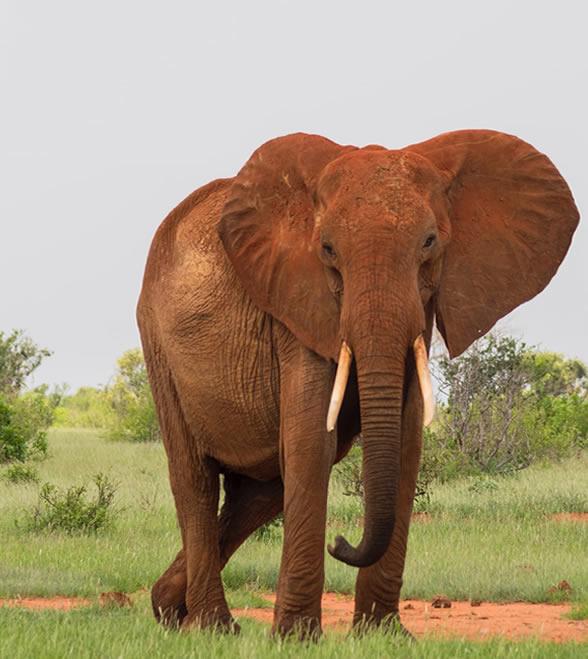 kenya_holiday_east_national_park