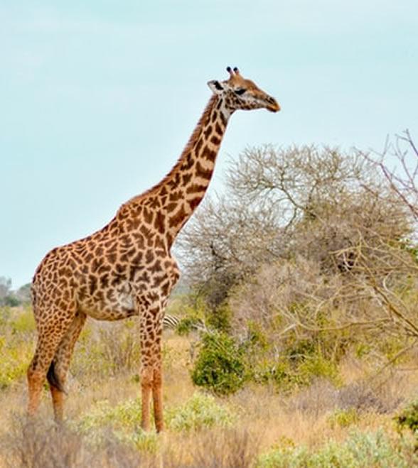 kenya_holiday_east_national_park_1
