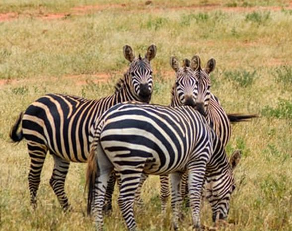 3 Days Tsavo East And West  National Park