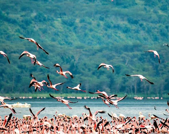 7 Days Safari Samburu  Aberdares  Lake Nakuru Masai Mara