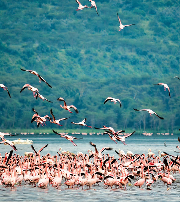 lake_nakuru_national_park