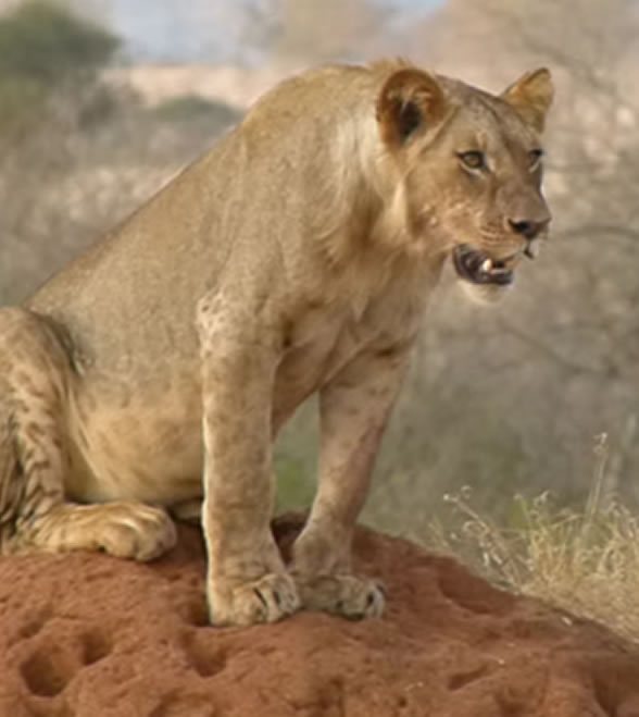 lion_bluff_4
