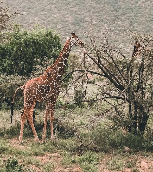 samburu_national_park