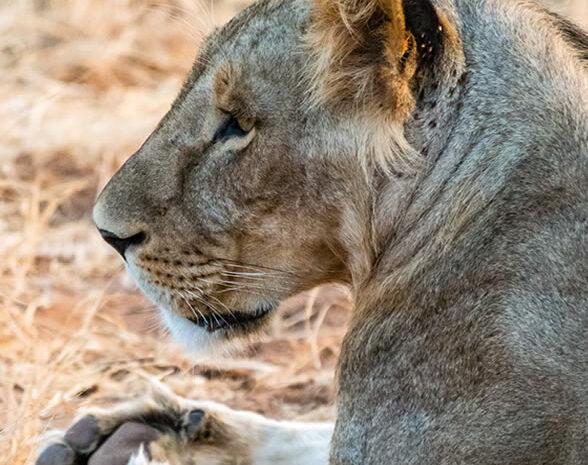 6 Days Safari Samburu, Lake Nakuru, Masai Mara