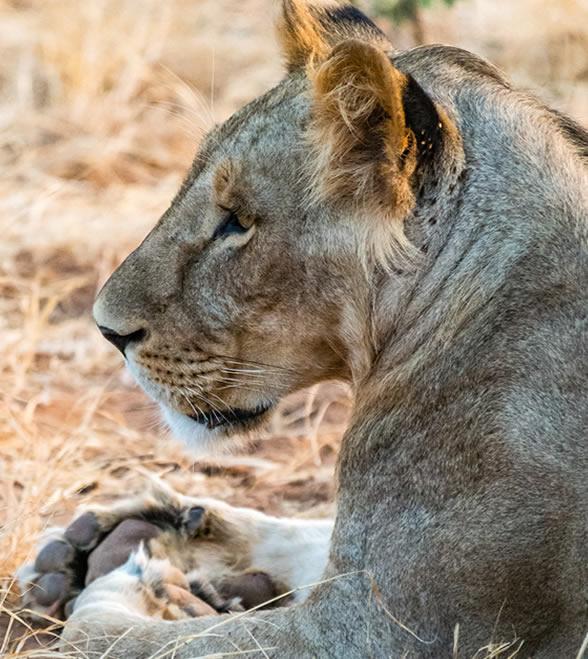 samburu_national_park_1
