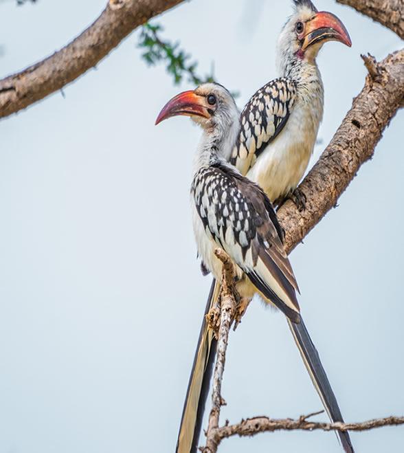 samburu_national_park_2