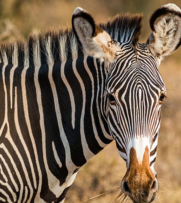 samburu_national_park_3